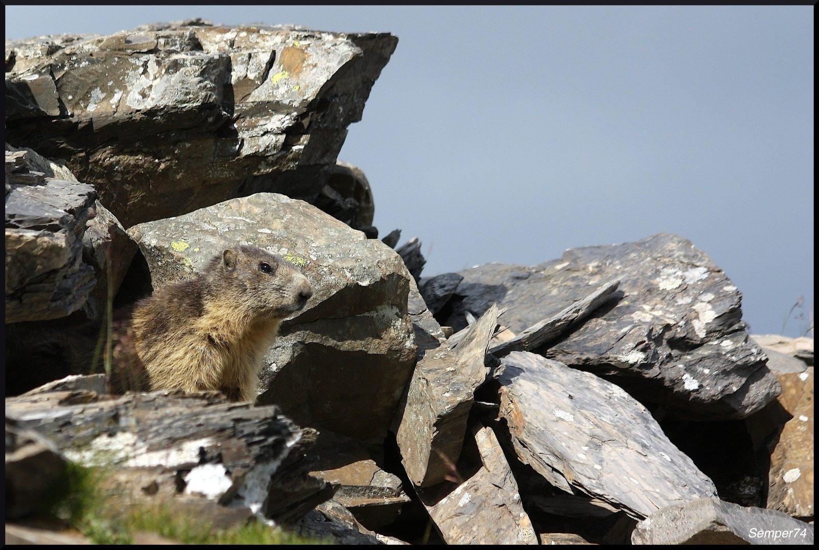 Randonnée «Balade aux marmottes»
